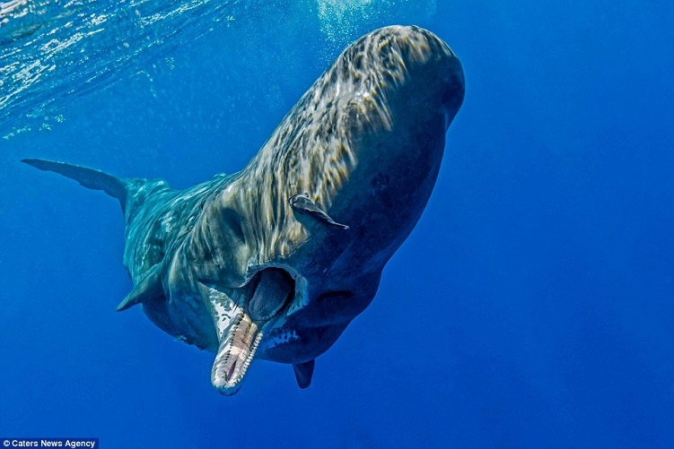 Consider, that facts about sperm whales can you