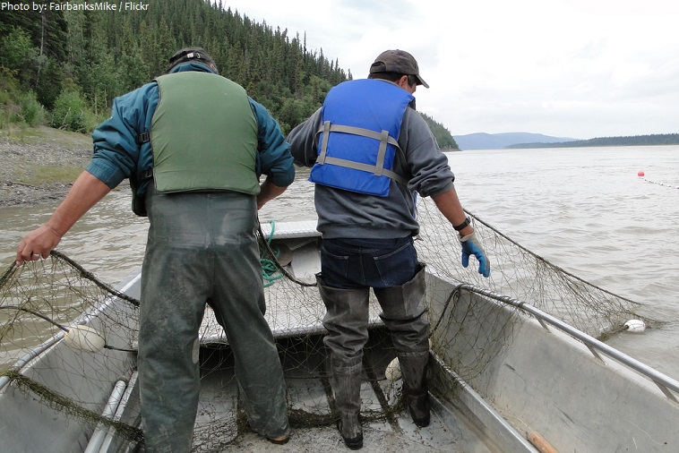 yukon river fishing