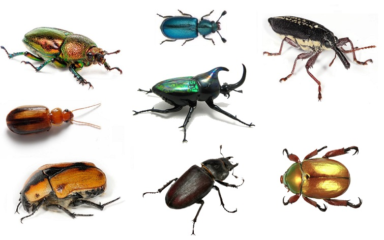 Interesting Facts About Beetles Just Fun Facts