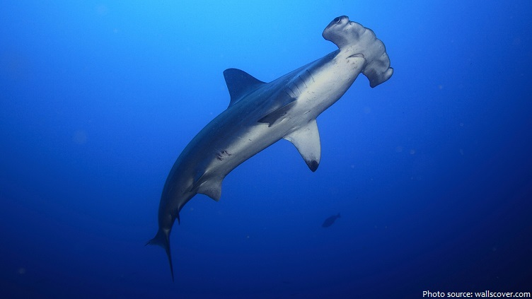 Interesting facts about hammerhead sharks | Just Fun Facts