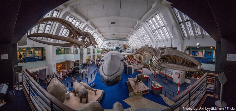 large mammals hall