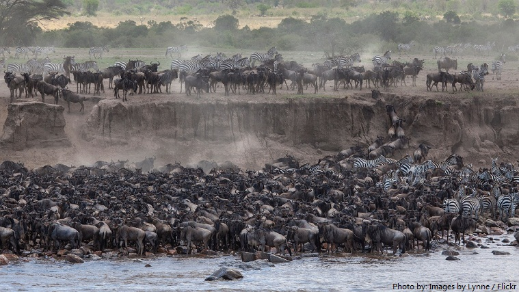 masai mara national reserve migration