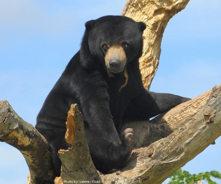sun-bear-2