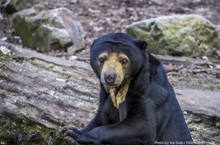 sun-bear-3