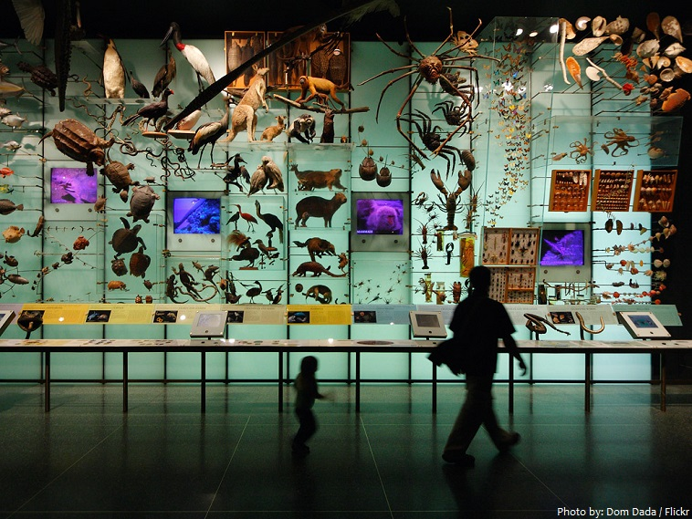 american museum of natural history biodiversity