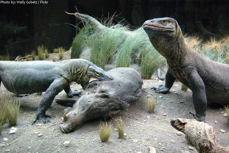 american museum of natural history reptiles