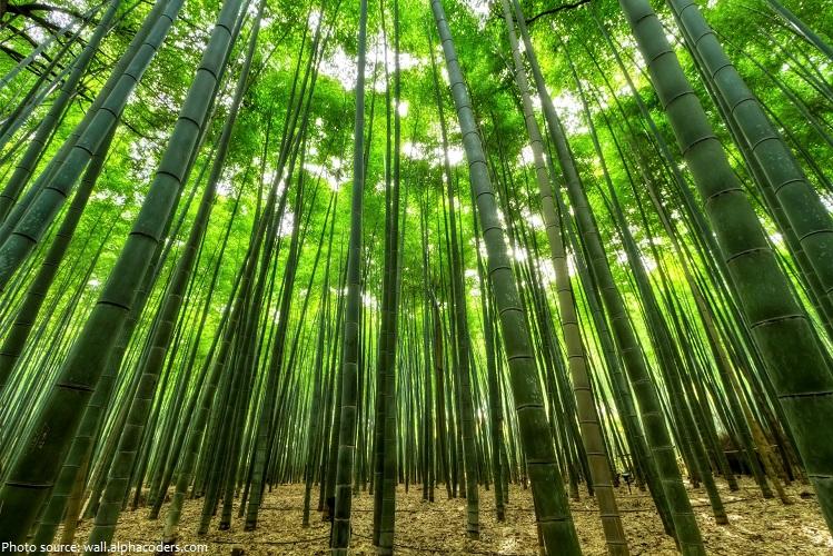 bamboo-4