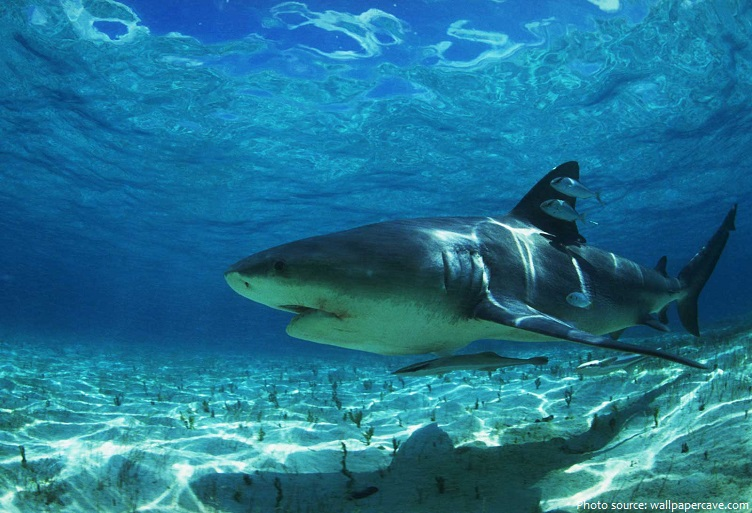 the life and habitat of a bull shark Three things you should know about north  since my research focuses on shark habitat use in  the entire system is available to the bull shark thanks to.