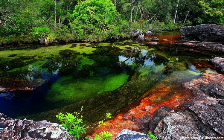 caño cristales river of five colors