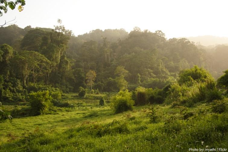obo natural park