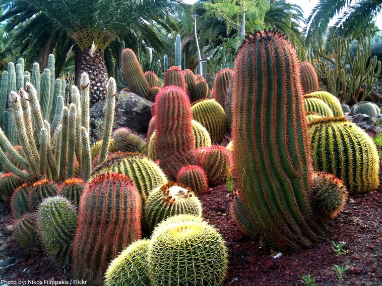 cactuses-4