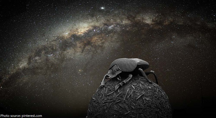 dung beetle milky way