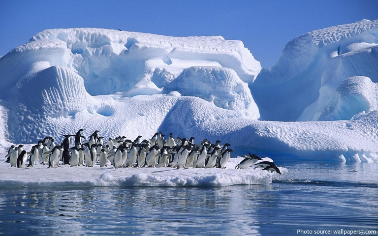 adélie penguins