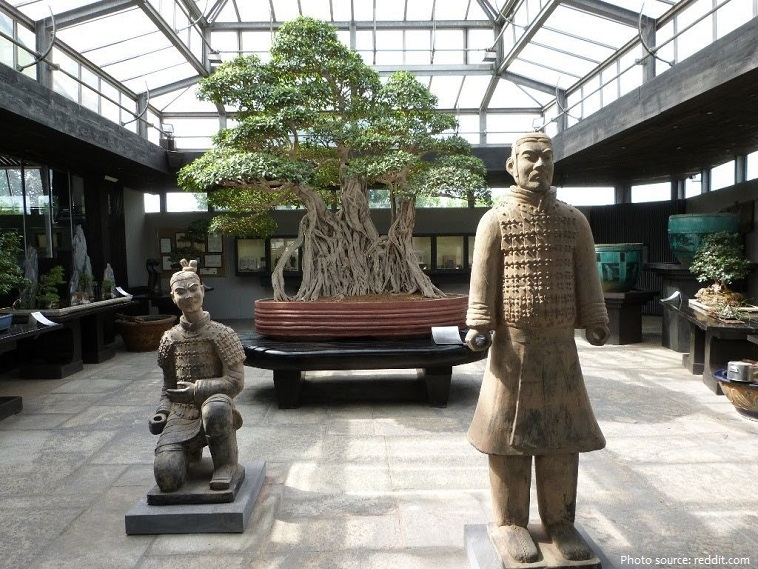 the oldest bonsai tree in the world
