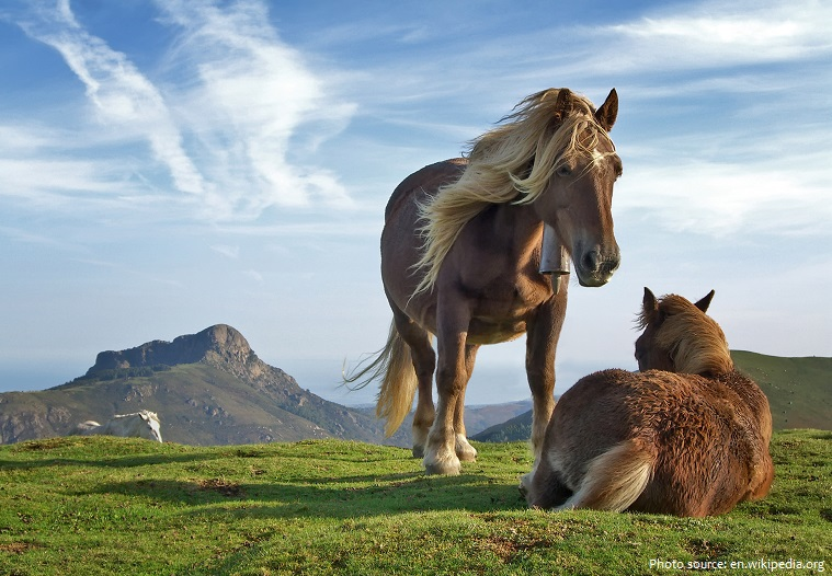 horses sleeping