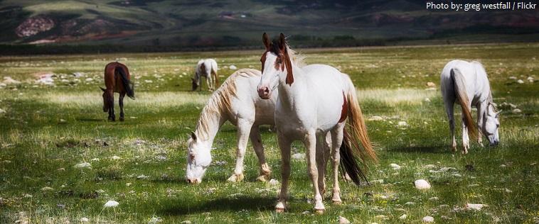 mustang horses