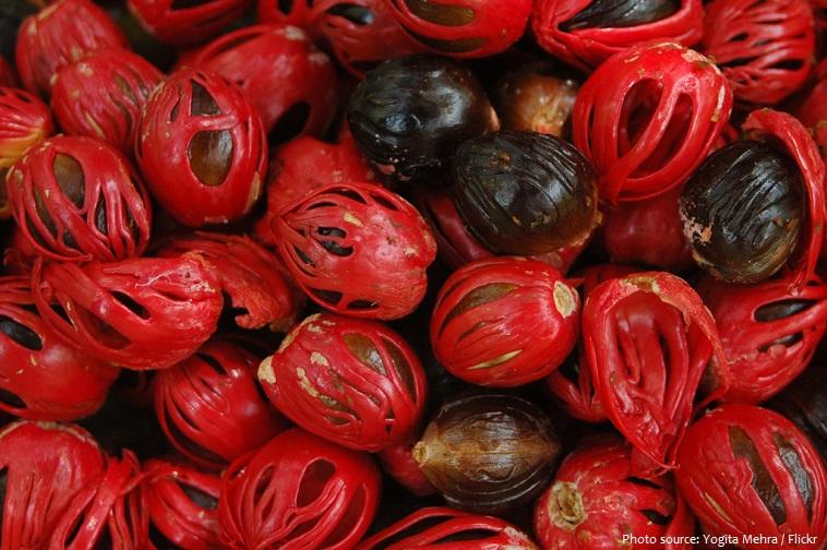 nutmeg seed