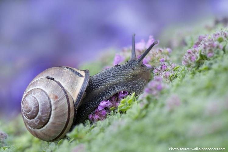 snail-2