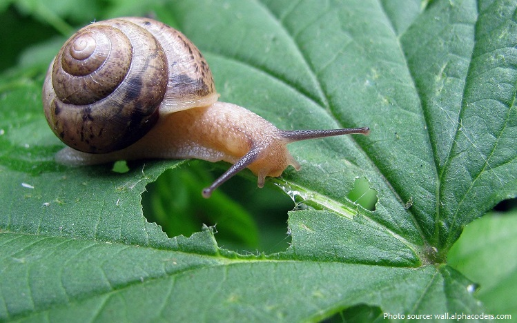 snail eating