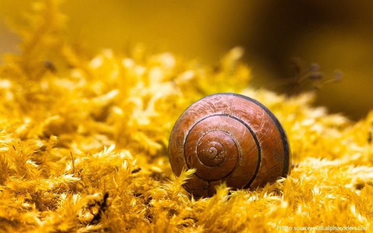 snail hibernating