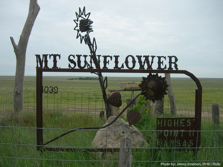 mount sunflower