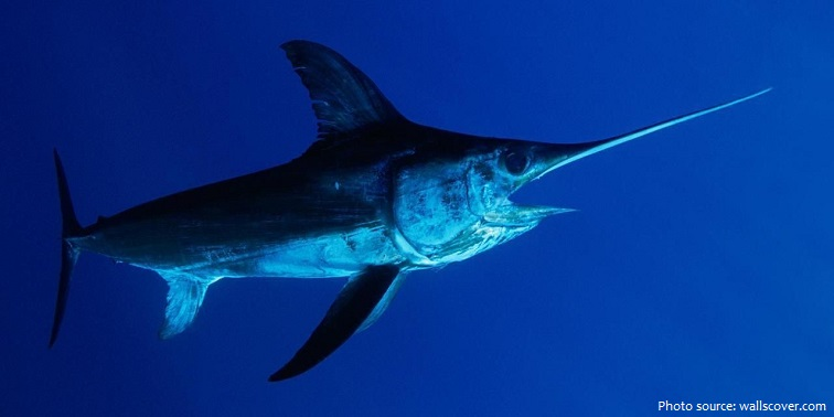 swordfish-5