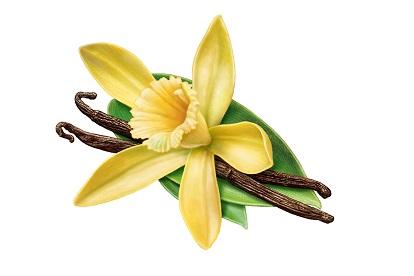 vanilla-flowers-3