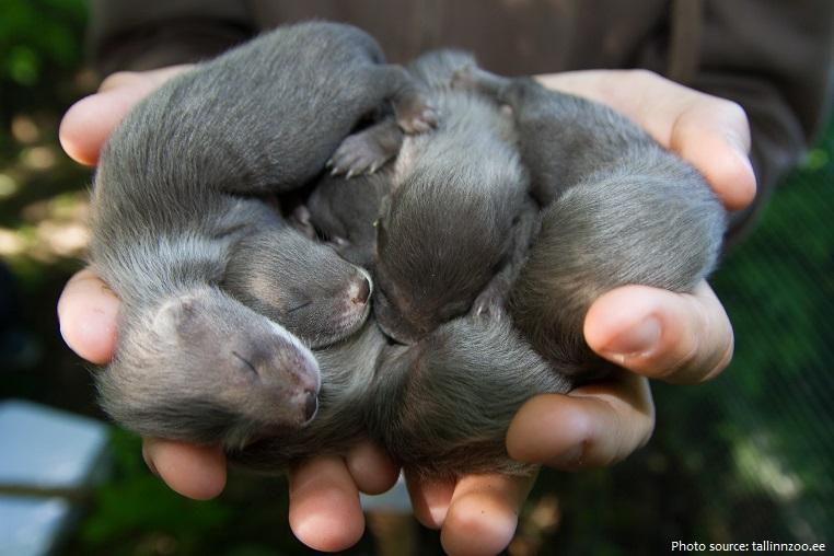 mink babies