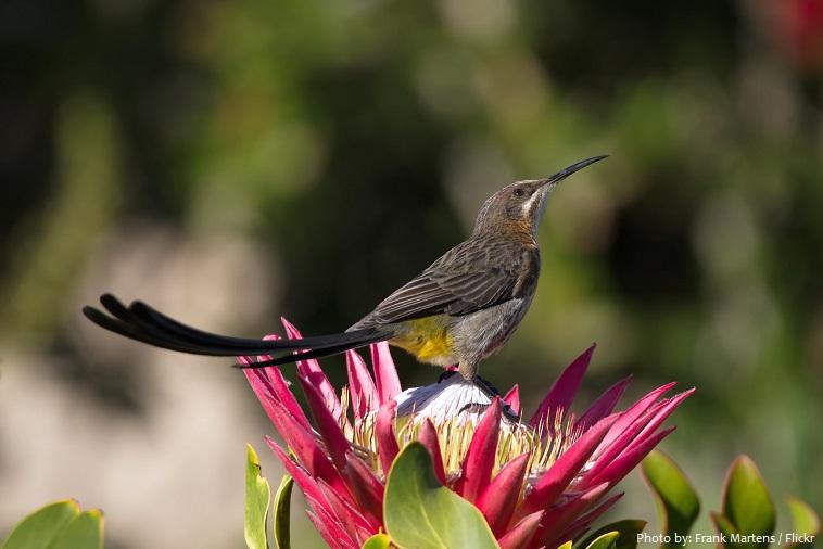 sunbird-4