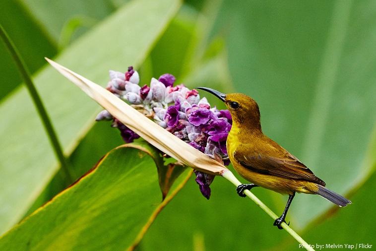 sunbird-5