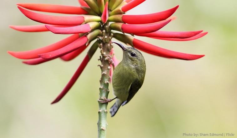 sunbirds-2