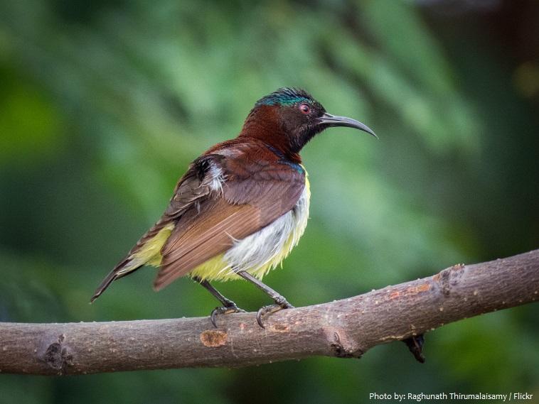 sunbirds-3