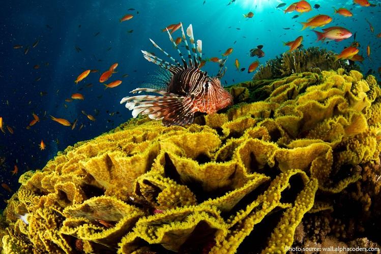 lionfish-4