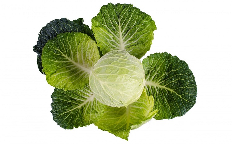 cabbage-5