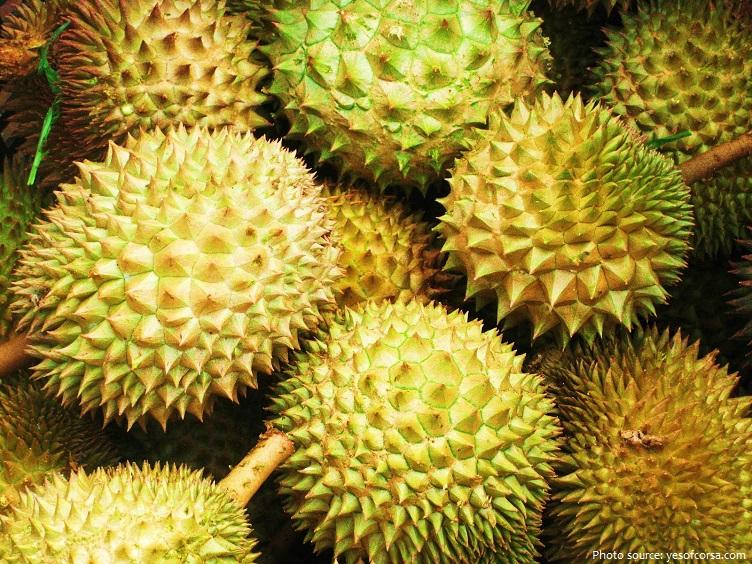 durian-3
