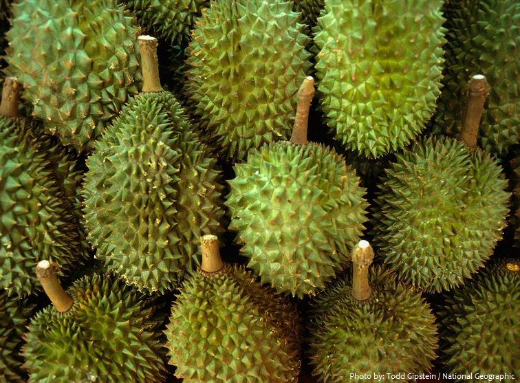 durian-4