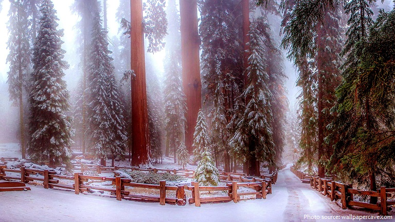 sequoia-national-park-4