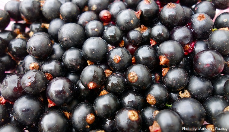 blackcurrants-2