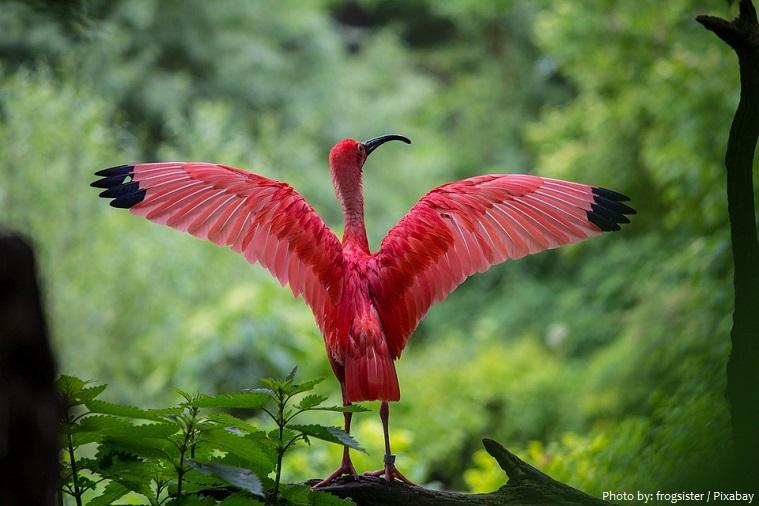 ibis-3