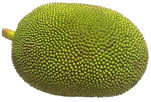 jackfruit-4