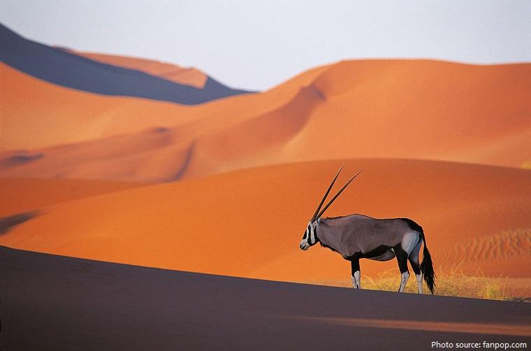 oryx-2
