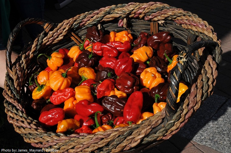 chili-peppers-3