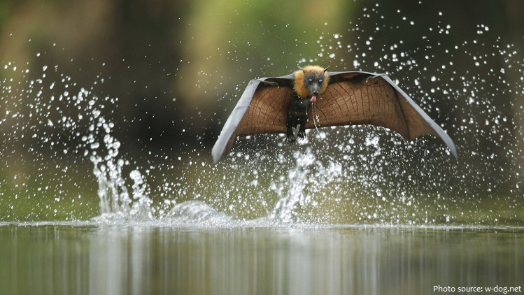flying-fox-2