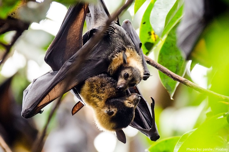 flying-fox-4