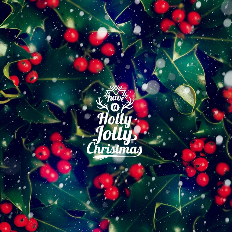 Interesting Facts About Holly Just Fun Facts