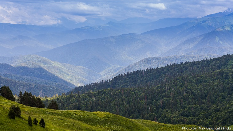 caucasus mountains forest