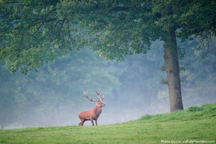 red-deer-2