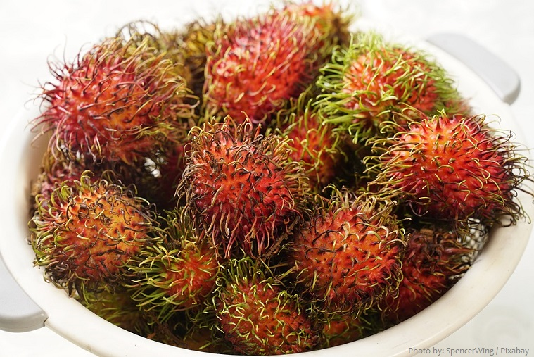 Interesting facts about rambutan | Just Fun Facts