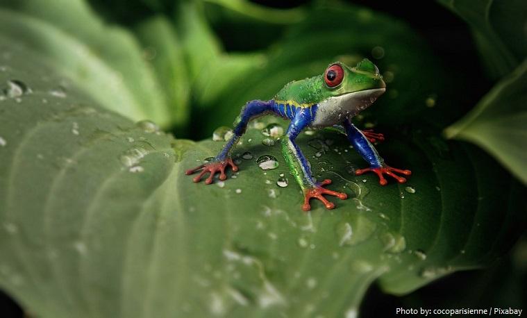 tree-frog-2
