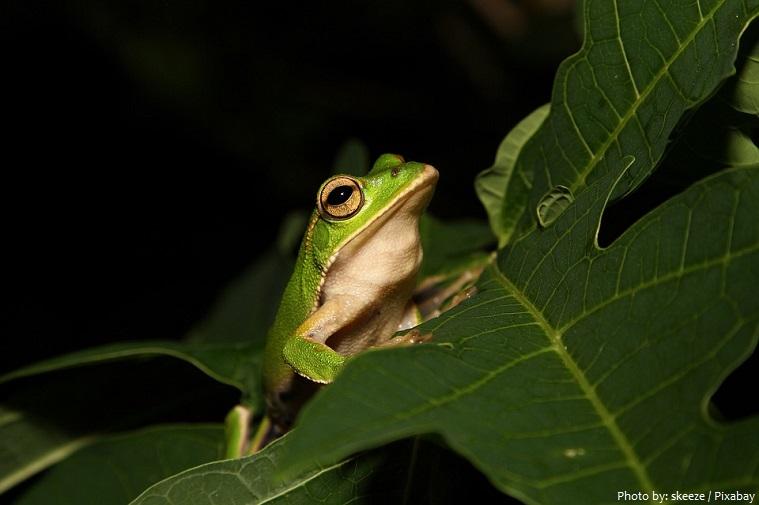tree-frog-3